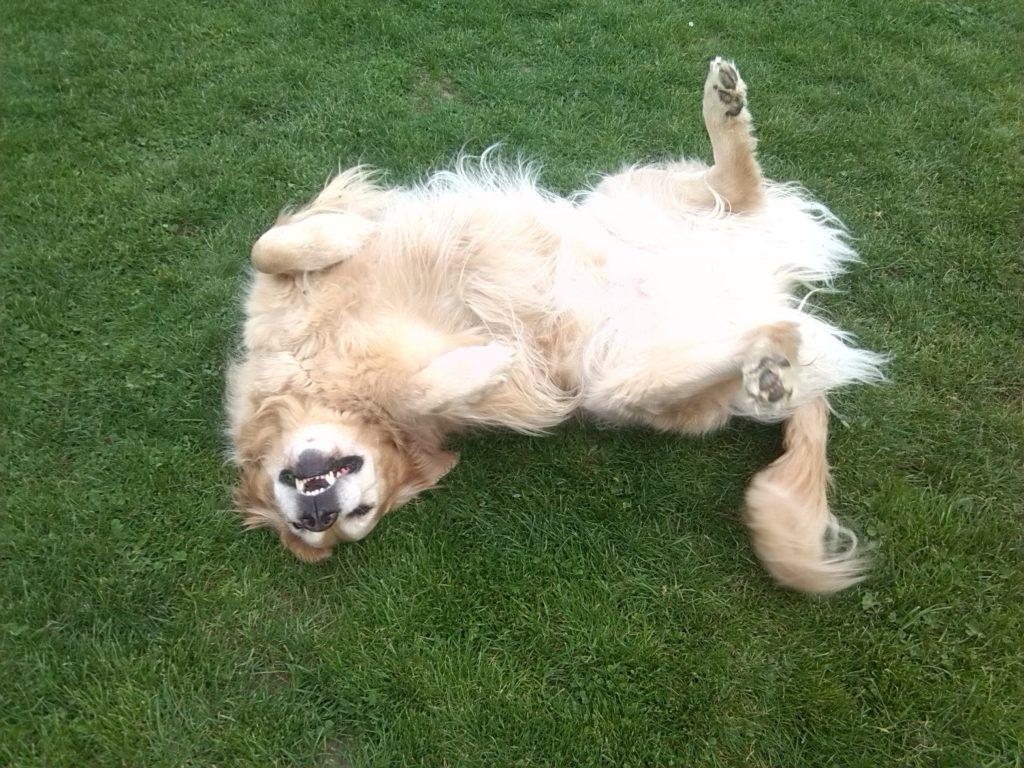 yoga hond olsene